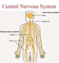central nervous system karuna yoga best yoga teacher training course bangalore india [ 1024 x 1128 Pixel ]