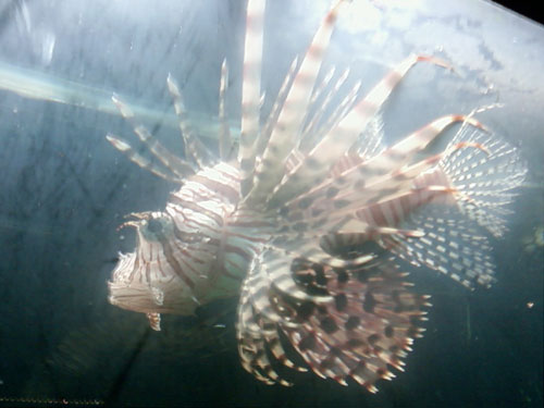 Photo title: Parkdale Fish