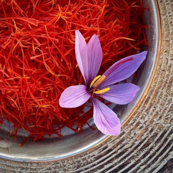 Saffron Flower & Threads