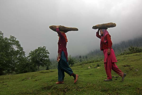 Returning Home: Tosa Maidan pasture is visited mostly by locals from Beerwah, Khag and some adjoining areas of Central Kashmir's Budgam district. People from these villages spend nine months in a year in meadow rearing their cattle, apart from getting firewood.