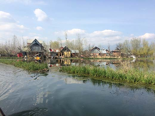 Demarcated area in Dal Lake used for the cultivation of Lotus stem - Nadru.