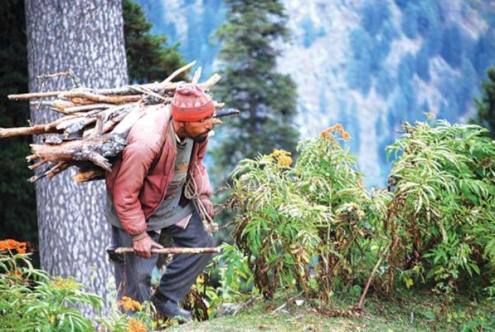 Jungle-of-Kashmir