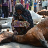 #Day84: Burning of Harvest, Damages to Orchards, Killings of Horses are War Crimes, says KCSDS