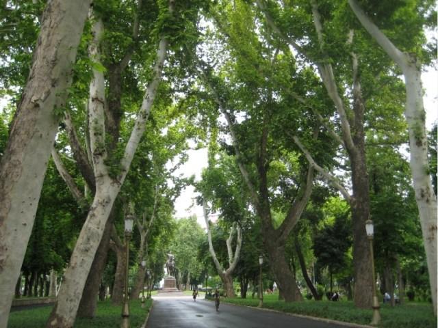 Ташкент Сквер Деревья