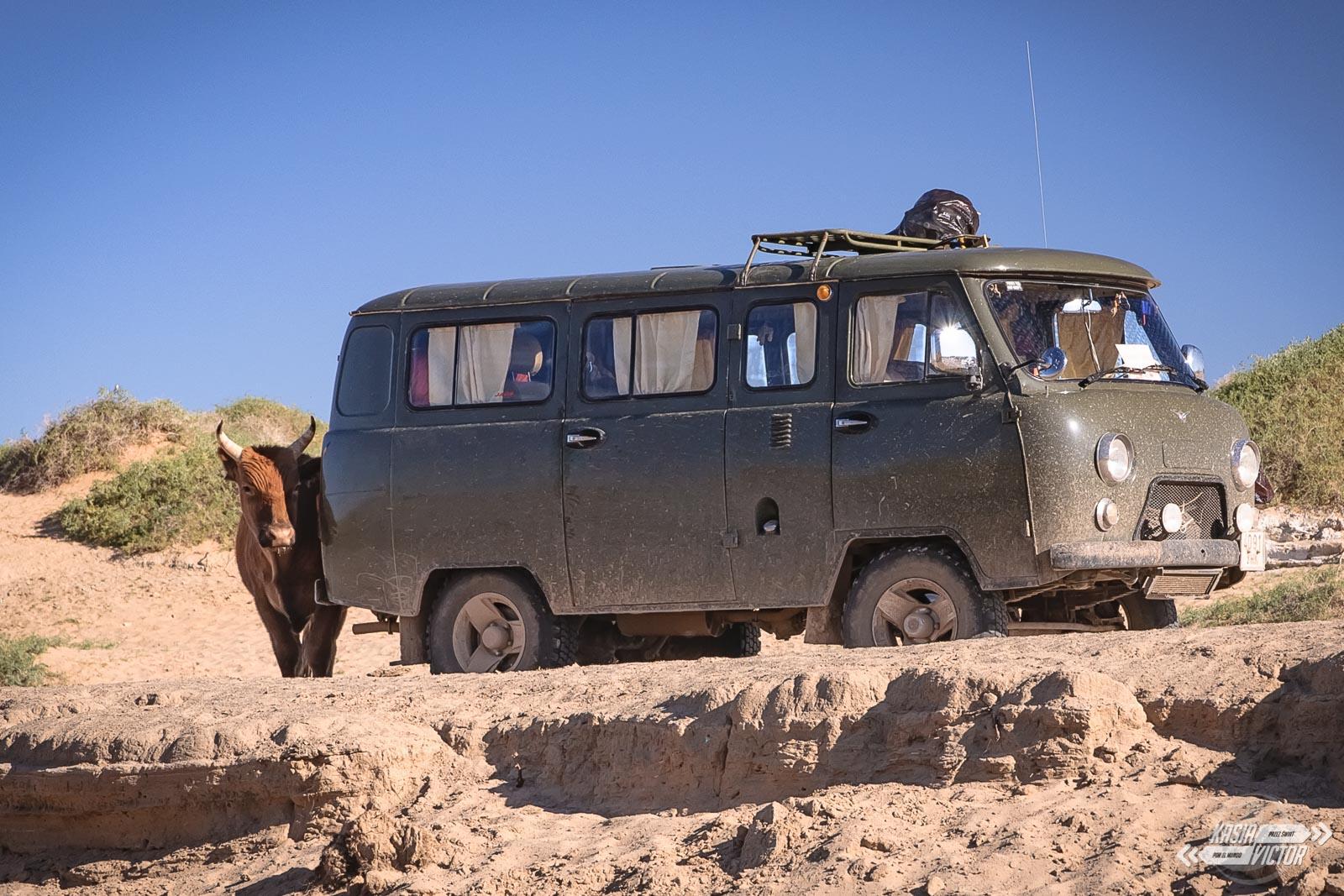 Wycieczka Po Pustyni Gobi