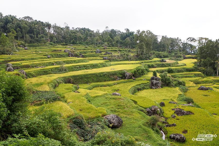 Tana Toraja. Algo Más Que Funerales