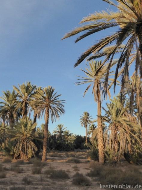 Oase Tighmert Marokko