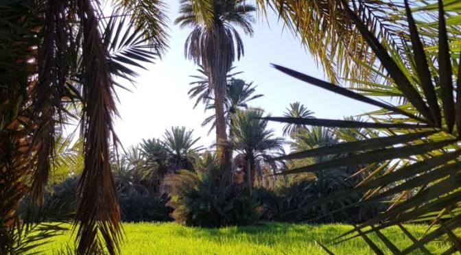 Roadtrip Marokko Teil 8: 4 Wochen in der Oase Tighmert / Marokko