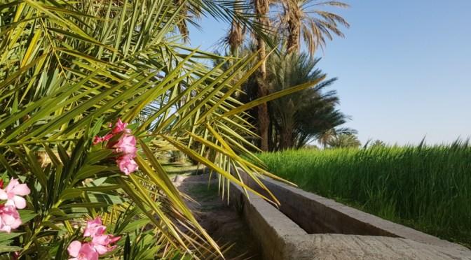 Roadtrip Marokko Teil 10: Icht