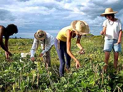 quero trabalho ou emprego trabalhador agricola