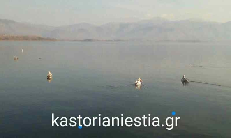 orca-image-1511624770691.jpg_1511624770809