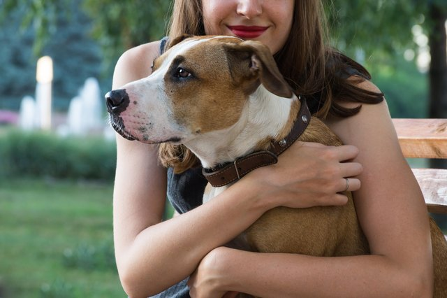 8 Mistakes That Are Making Your Dog Depressed