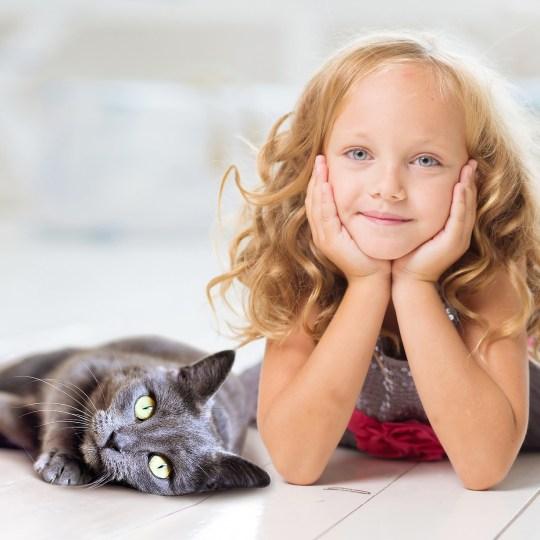 De kat als huisdier, de basis