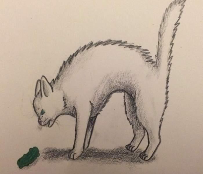 Zijn katten bang voor komkommers?