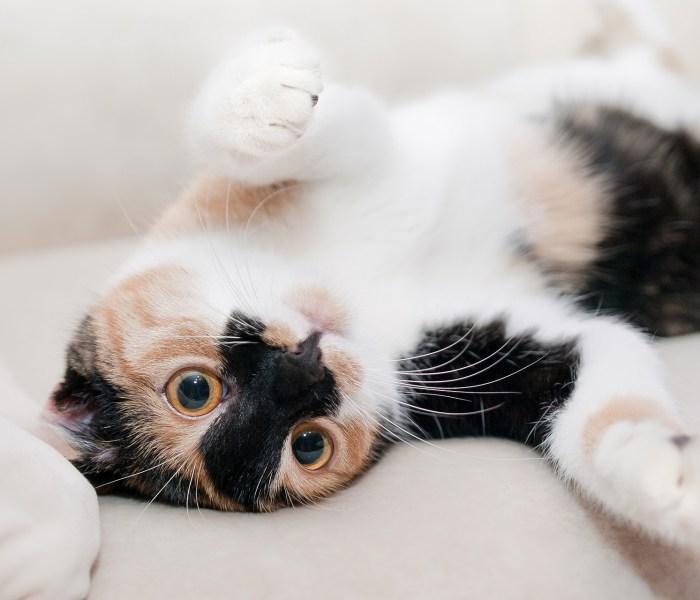 De leukste kattennamen van 2019