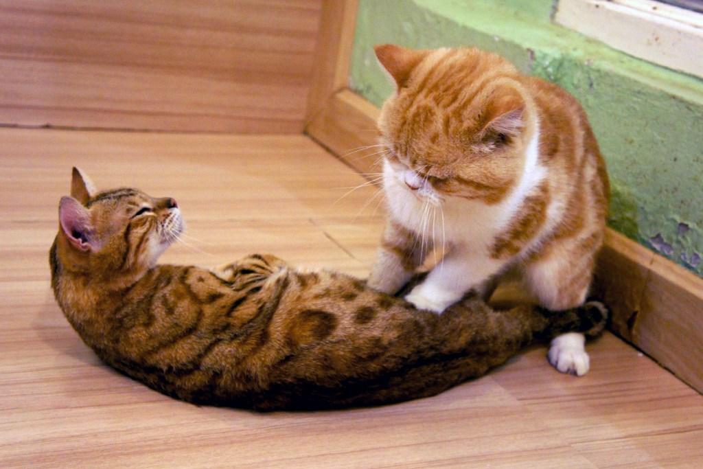 katten trappelen