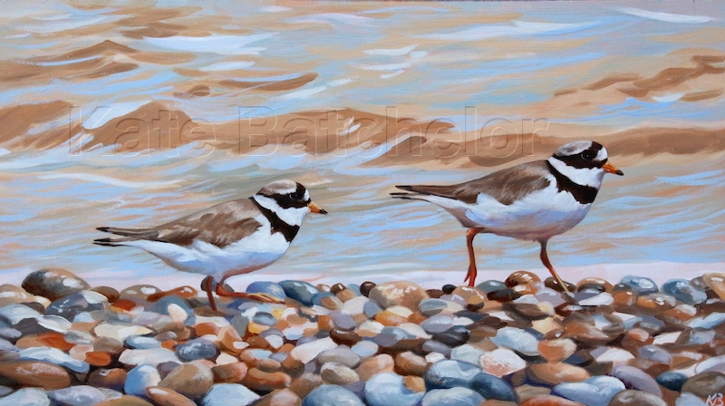 Kate plovers copy