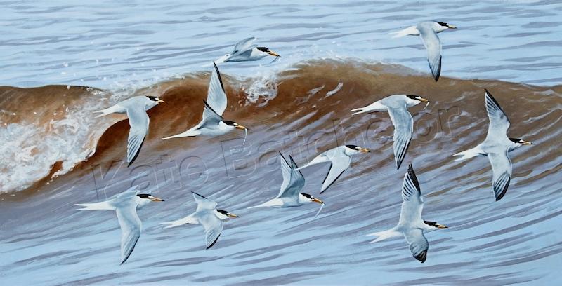 Kate terns copy