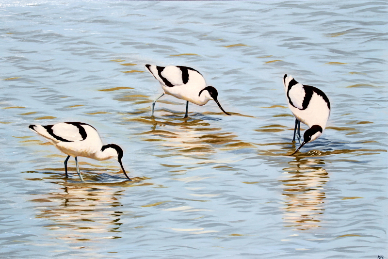 avocets 2017 800 px