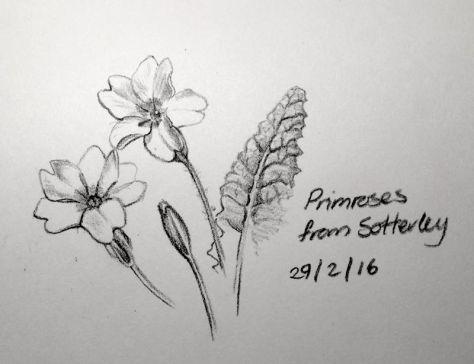 Sotterley Primroses
