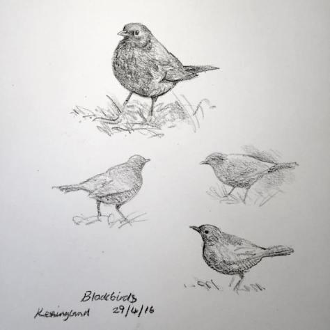 blackbird sketches 120