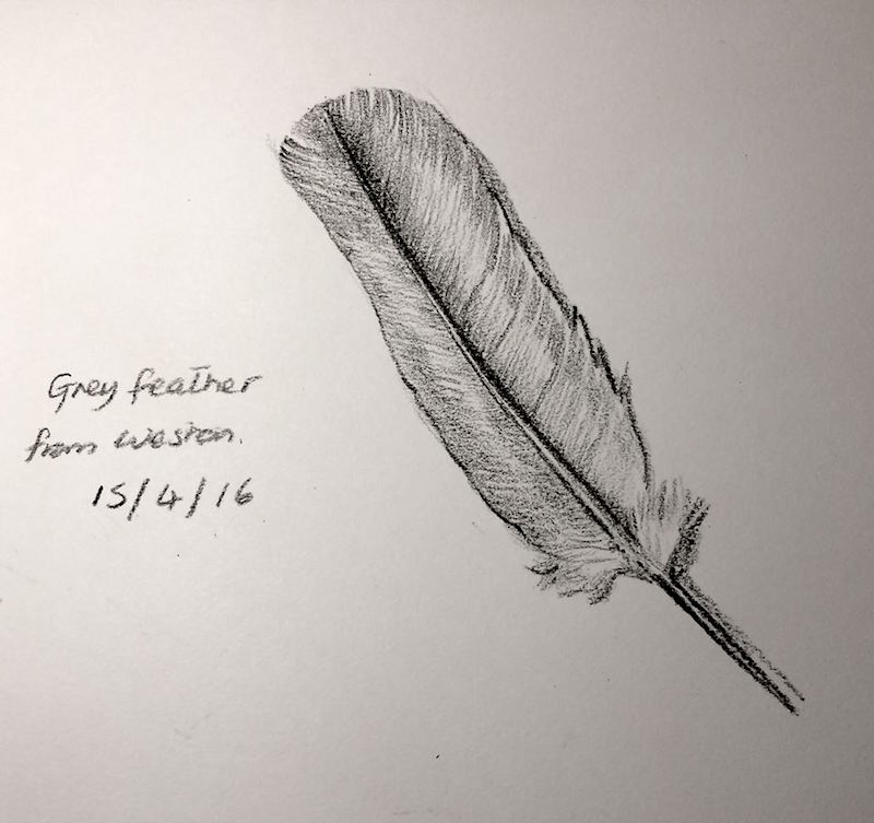 feather 106