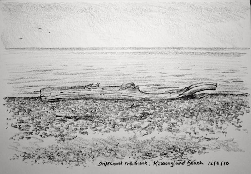 Driftwood tree stump sketch 164