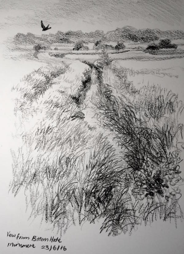 From bittern hide sketch 175