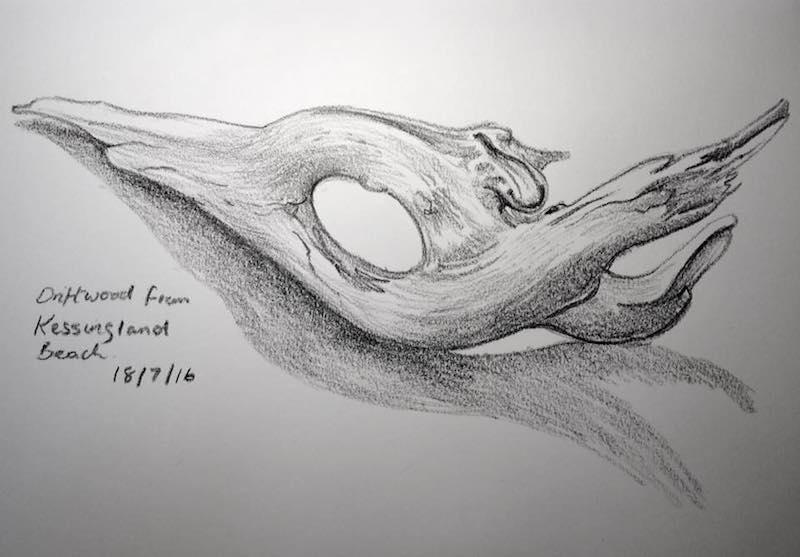 Driftwood sketch 200