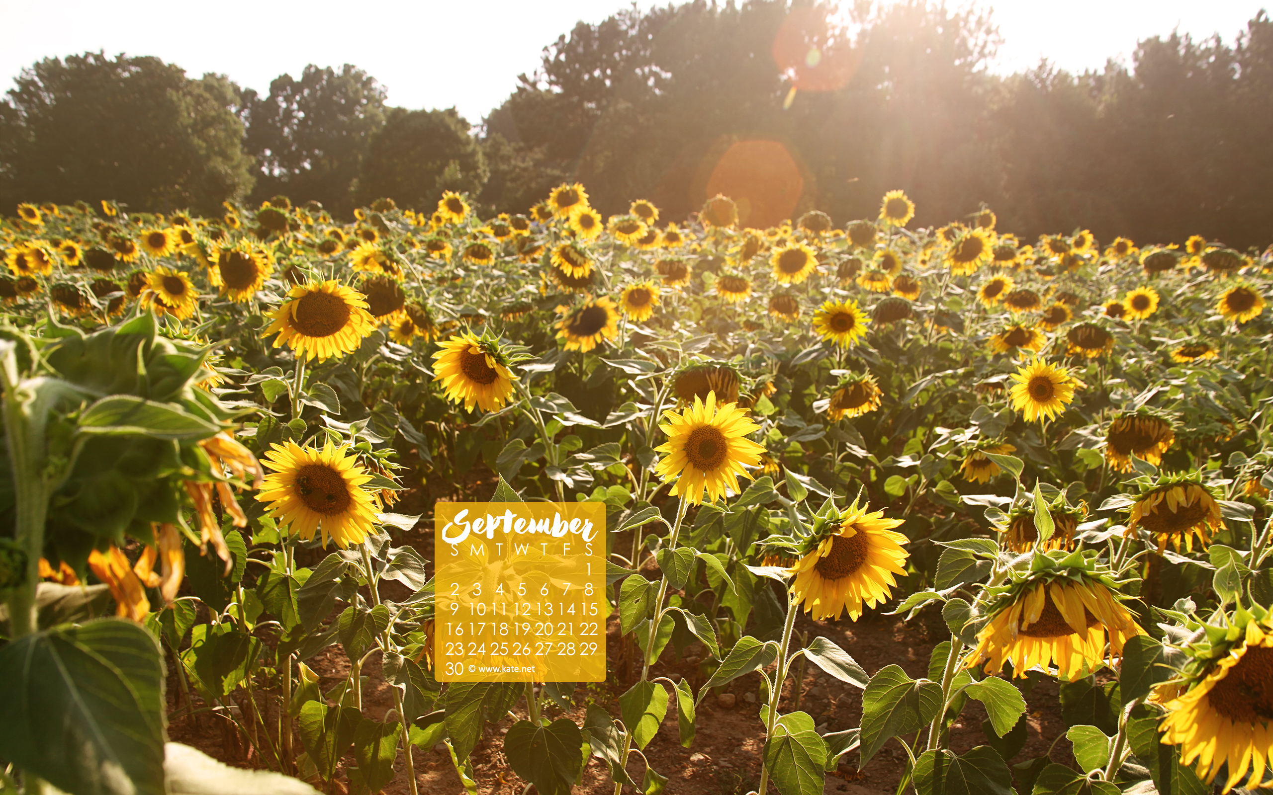 Fall Sunflower Desktop Wallpaper Calendar Wallpapers Desktop Wallpapers By Kate Net