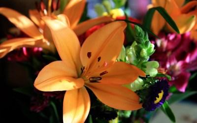 Flower Wallpapers, Flower Backgrounds on Kate.net