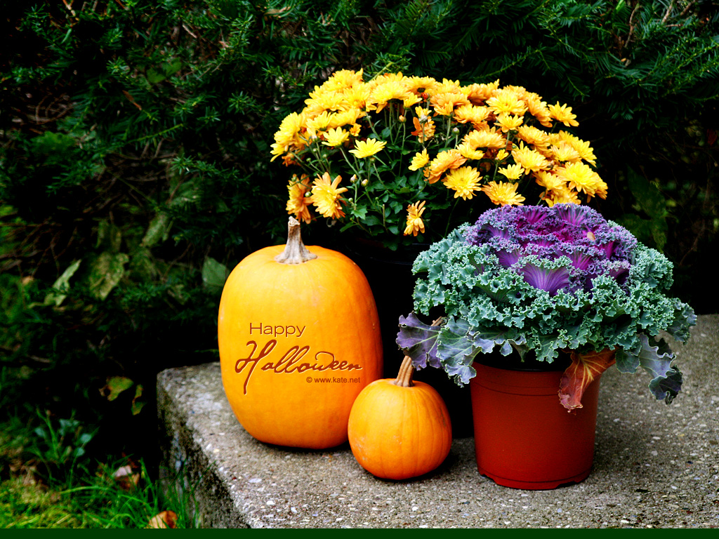 Fall Desktop Wallpaper With Pumpkins Halloween Wallpapers Halloween Desktop Backgrounds On