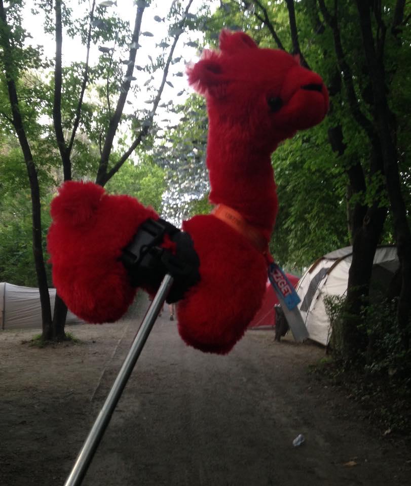 alpaca tent