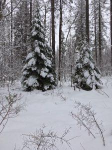 No Garden, Feburary Snow, Winter