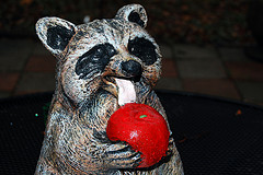 This igly raccoon statue was left in my yard alongside a ransom note.