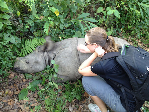 In Chitwan at some animal preserve, I got to pet a baby rhinoceros!