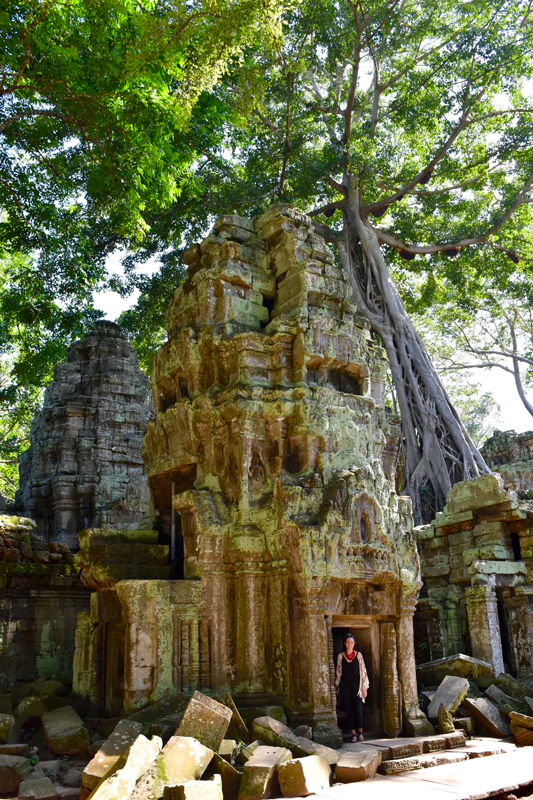 cambodia ta prohm temple trees siem reap