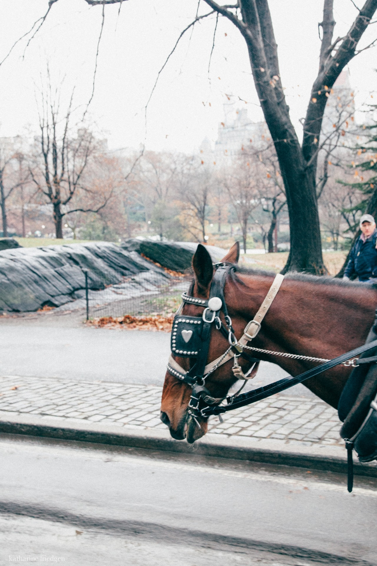 horses in new york central park