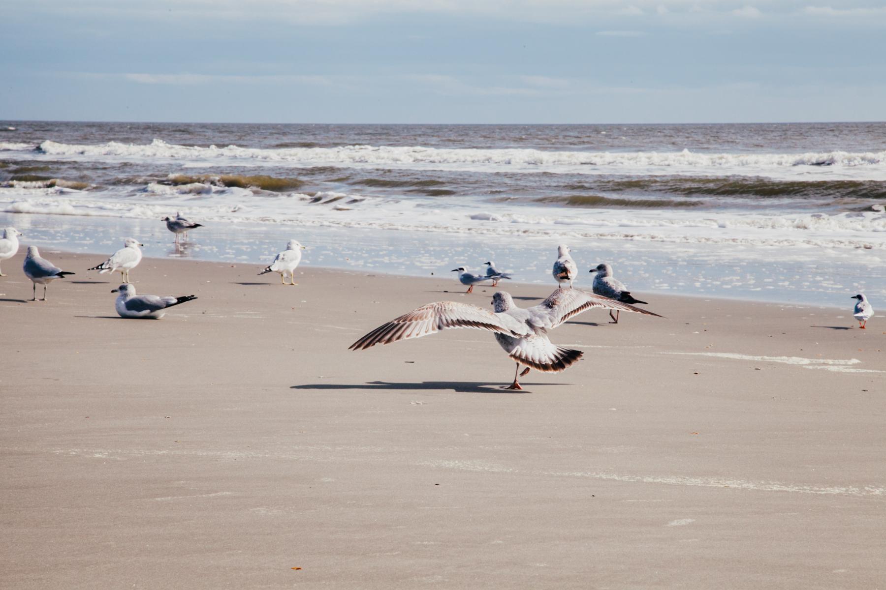 katharine-friedgen-photography-beach-15