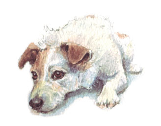 Watercolour illustration of a Jack Russell Terrier