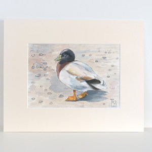 duck watercolour painting