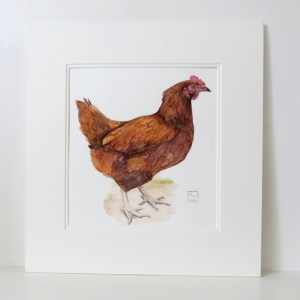Rhode Island Chicken Painting