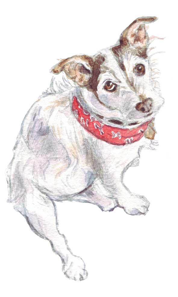 watercolour terrier portrait
