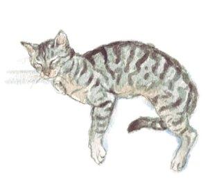 Tabby Cat Asleep on a Ledge, original watercolour illustration