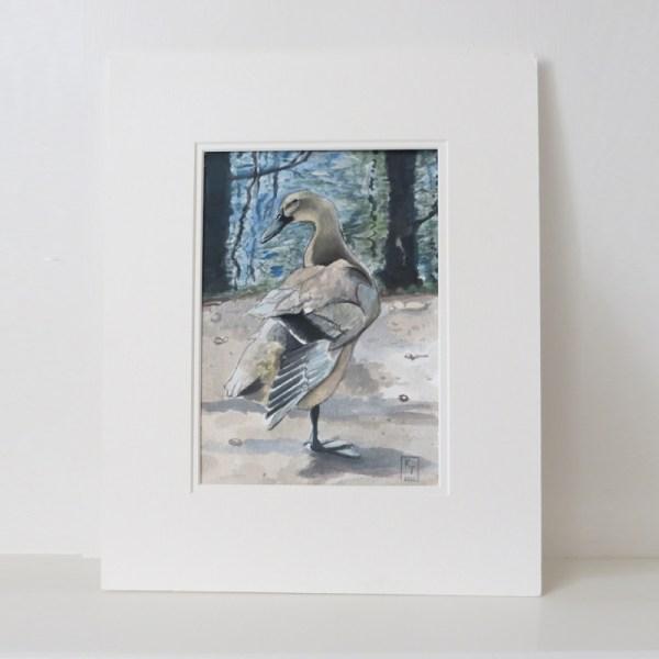 Duck by Water, original duck paintings