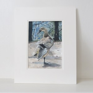 Duck by Water, original duck paintings