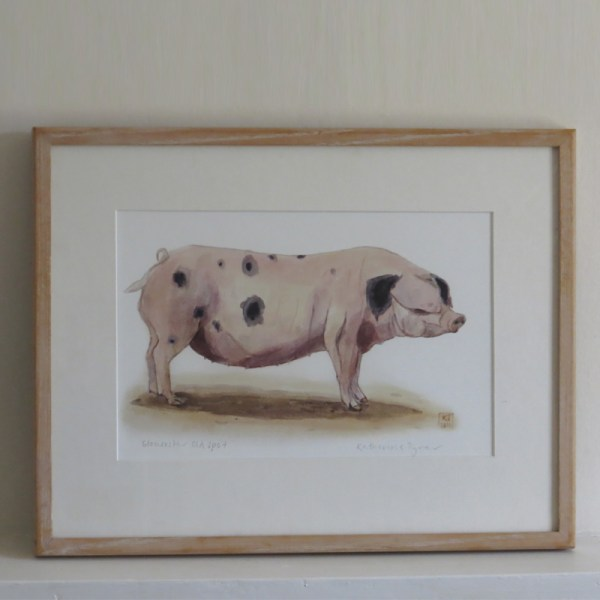 Gloucester pig framed painting
