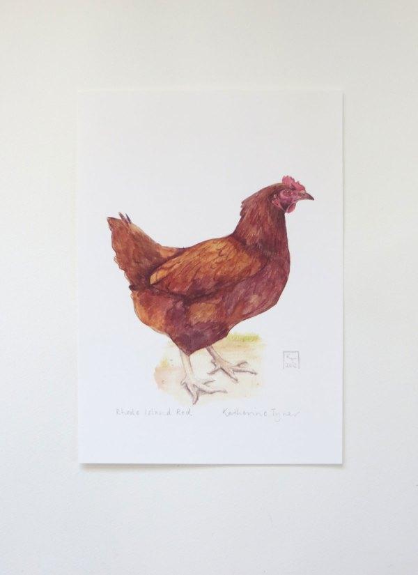 Rhode Island Red chicken print, chicken artwork uk