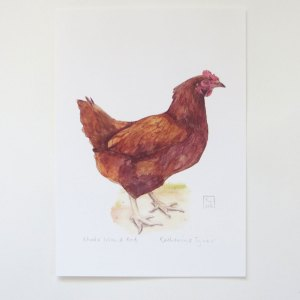 Rhode Island Red chicken print, chicken artwork uk