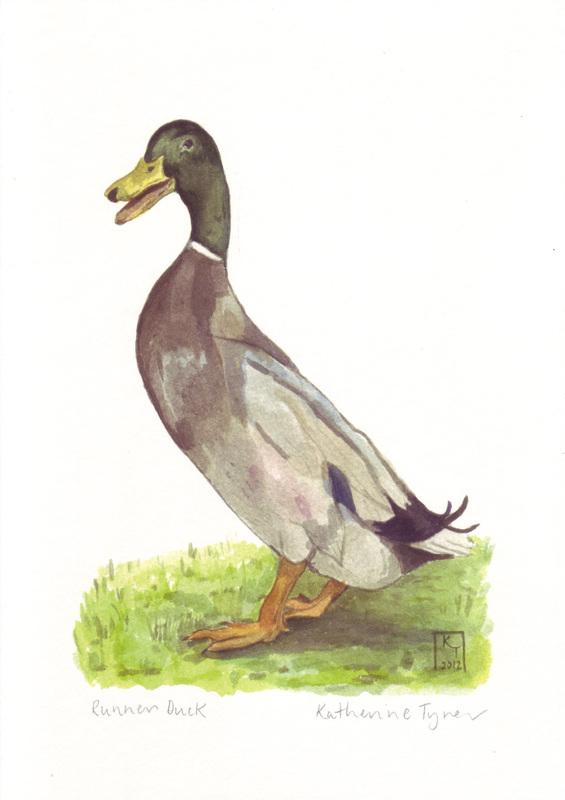 fine art print, runner duck, duck print, duck illustration